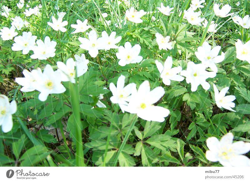Frühling Natur Blume grün Wiese April