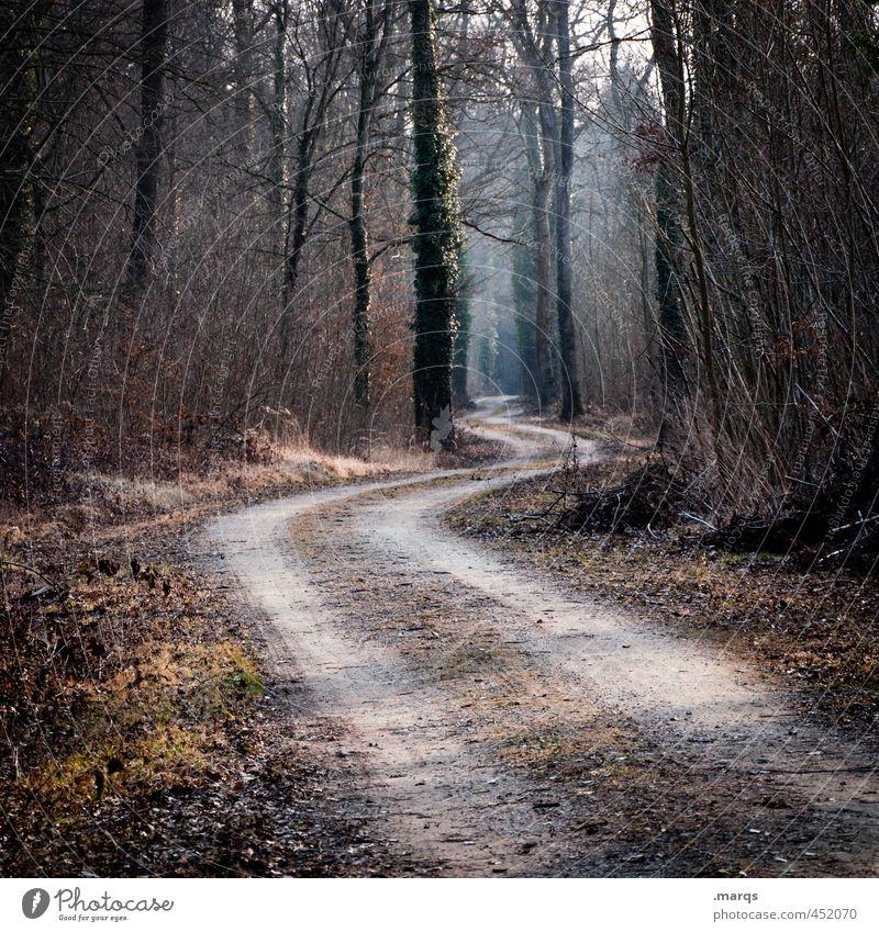 Your Way Ausflug Umwelt Natur Landschaft Herbst Schönes Wetter Baum Wald Verkehrswege Wege & Pfade einzigartig Zukunft Kurve Farbfoto Außenaufnahme Menschenleer