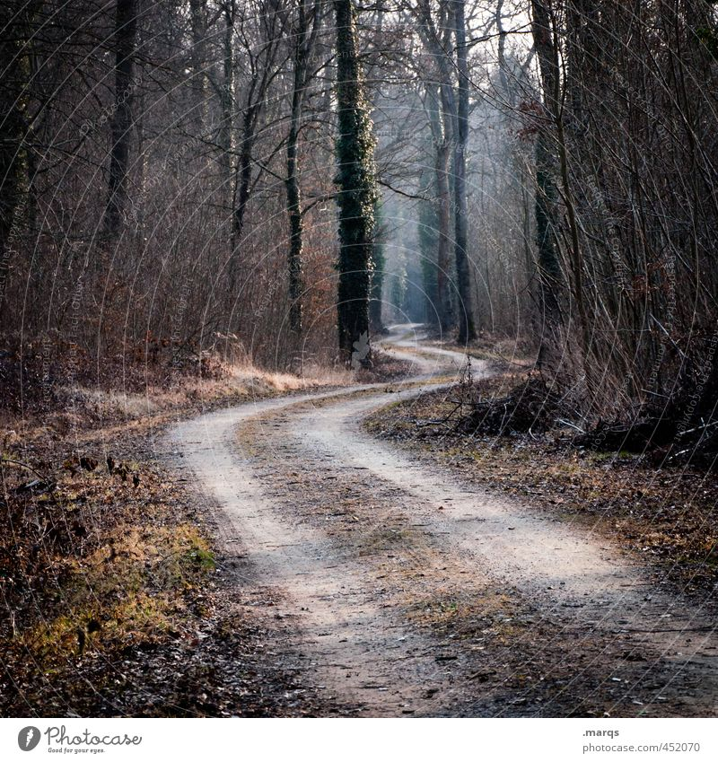 Your Way Natur Baum Landschaft Wald Umwelt Herbst Wege & Pfade Schönes Wetter Ausflug Zukunft einzigartig Verkehrswege Kurve
