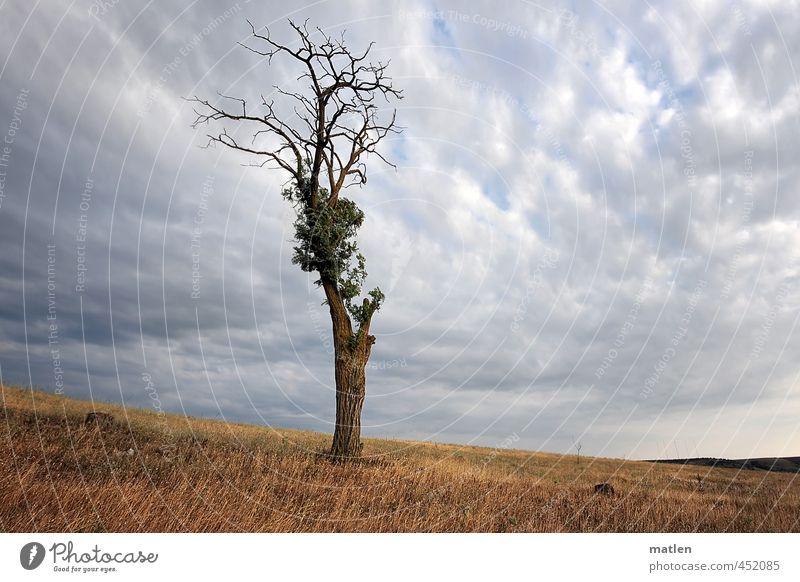 Solist Landschaft Himmel Wolken Gewitterwolken Horizont Sommer Wetter schlechtes Wetter Baum Wiese braun grau überleben Kämpfer Steppe Farbfoto Außenaufnahme
