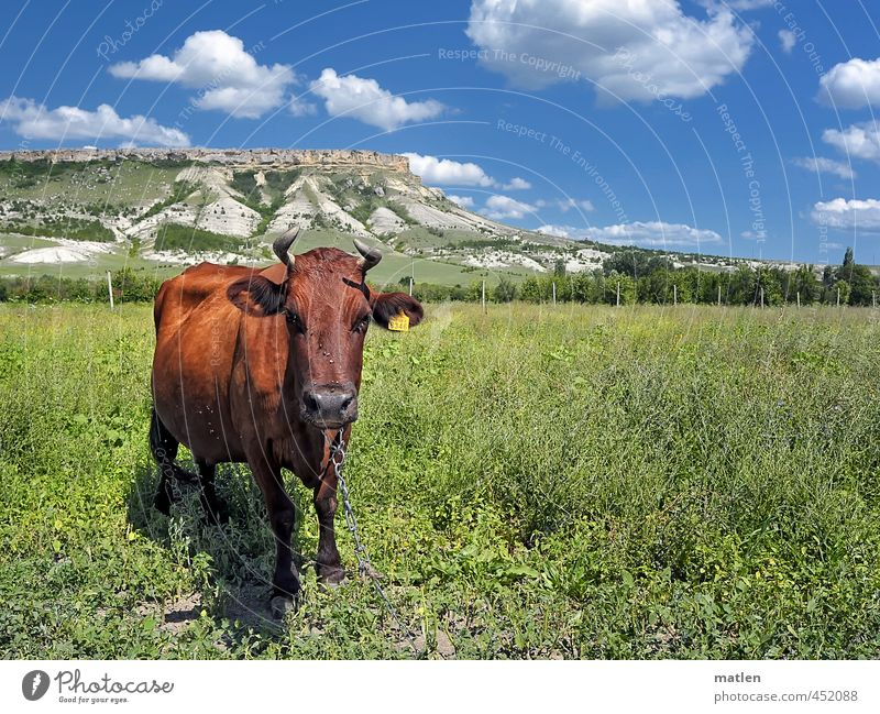 komm ruhig näher Landschaft Himmel Wolken Horizont Sonne Sommer Wetter Schönes Wetter Baum Gras Sträucher Feld Felsen Berge u. Gebirge Tier Haustier Kuh 1 blau