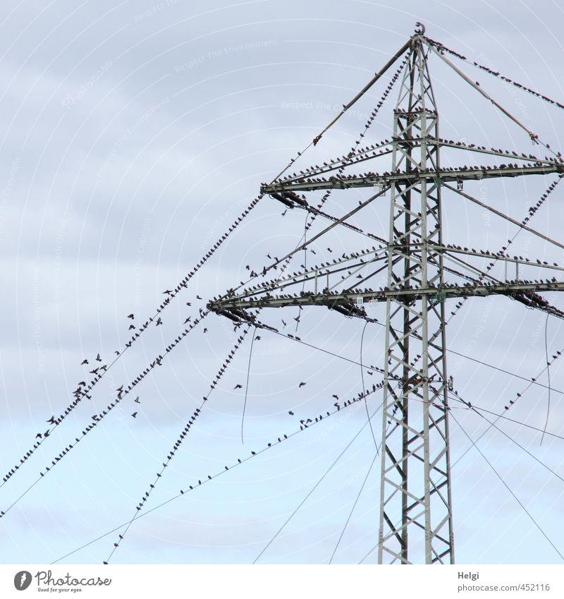 Reisevorbereitung... Energiewirtschaft Strommast Leitung Himmel Wolken Herbst Tier Wildtier Vogel Schwarm Bewegung fliegen sitzen stehen authentisch