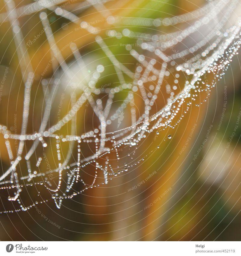 Spinnerei... Natur weiß ruhig gelb Umwelt Leben Herbst grau natürlich Stimmung braun glänzend authentisch Ordnung nass ästhetisch