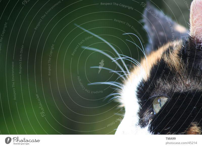 Ich habe Sommerferien: Mausfrei grün rot Katze Barthaare dreifarbig mausfrei