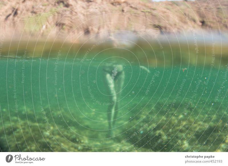 Der Unter-Gang Ferien & Urlaub & Reisen Sommer Meer Erholung feminin Schwimmen & Baden Beine gehen außergewöhnlich Körper nass tauchen Sommerurlaub Wohlgefühl