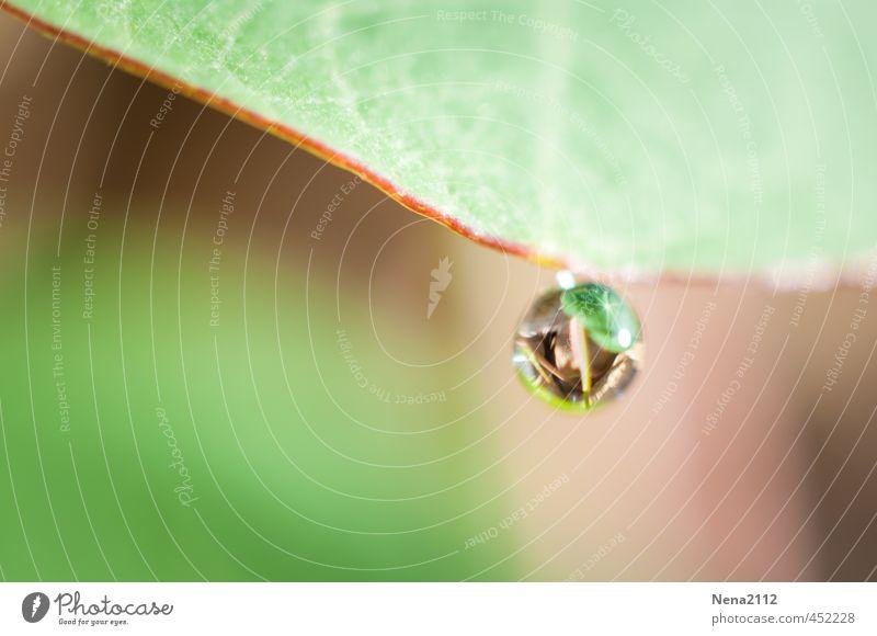 Aufgehängt Umwelt Natur Wasser Frühling Sommer Regen Pflanze Blatt Grünpflanze Garten Wiese klein nass rund grün Wassertropfen tropfend Tropfen