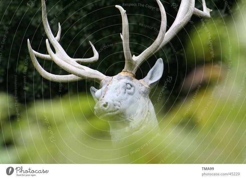im Wald? grün Tier Freizeit & Hobby Wildtier Horn Hirsche Pirsch