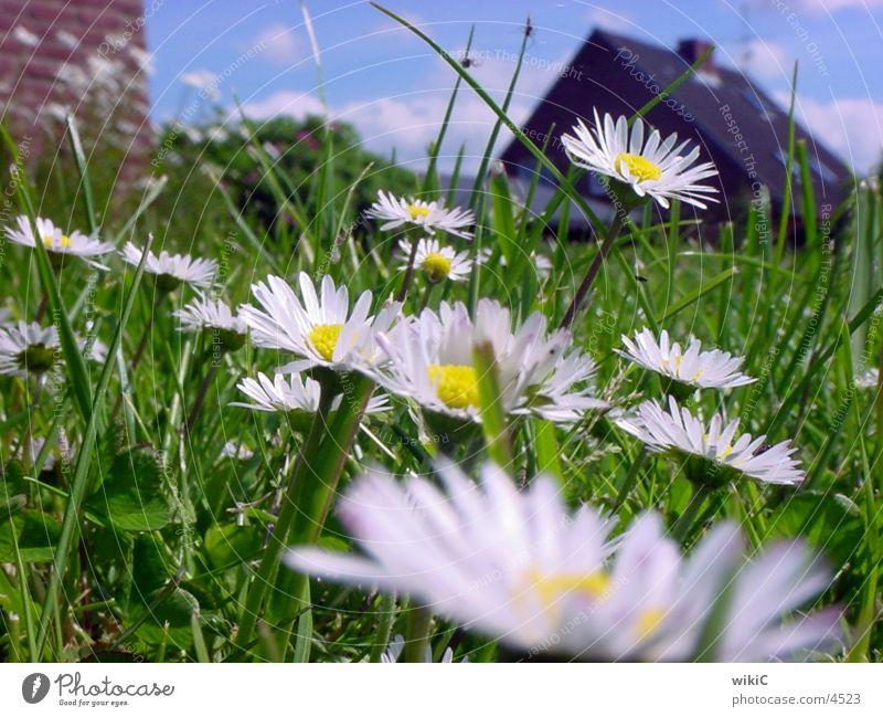 Blumenwiese Mai grün Natur Nahaufnahme