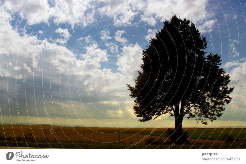 Einsamkeit Himmel Baum Wolken Einsamkeit Wiese Stimmung Feld Niveau