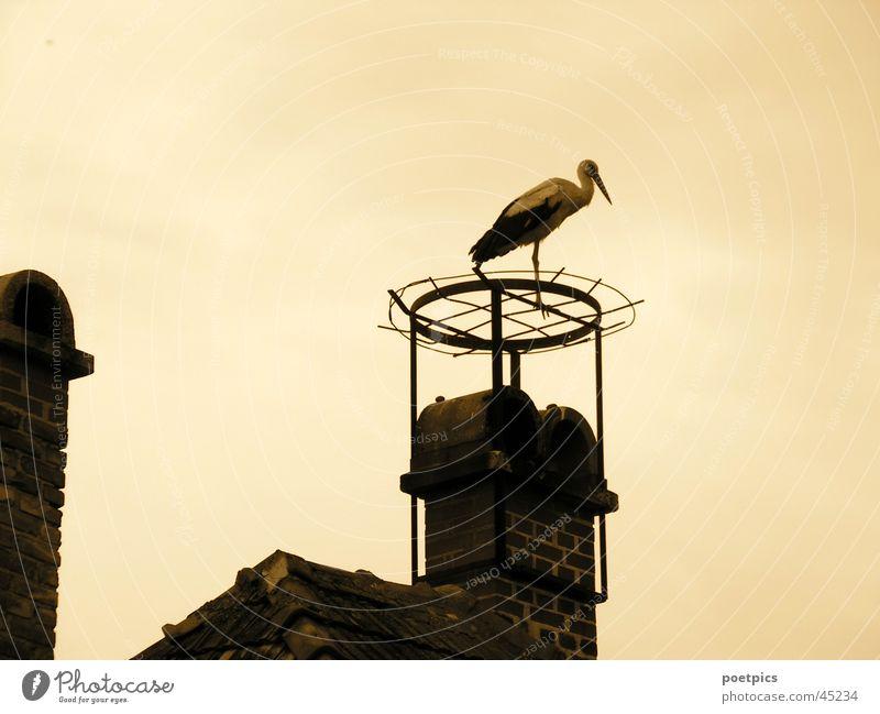 ...wer hat mein Nest geklaut? Himmel Dach Schornstein Sepia Storch Zugvogel