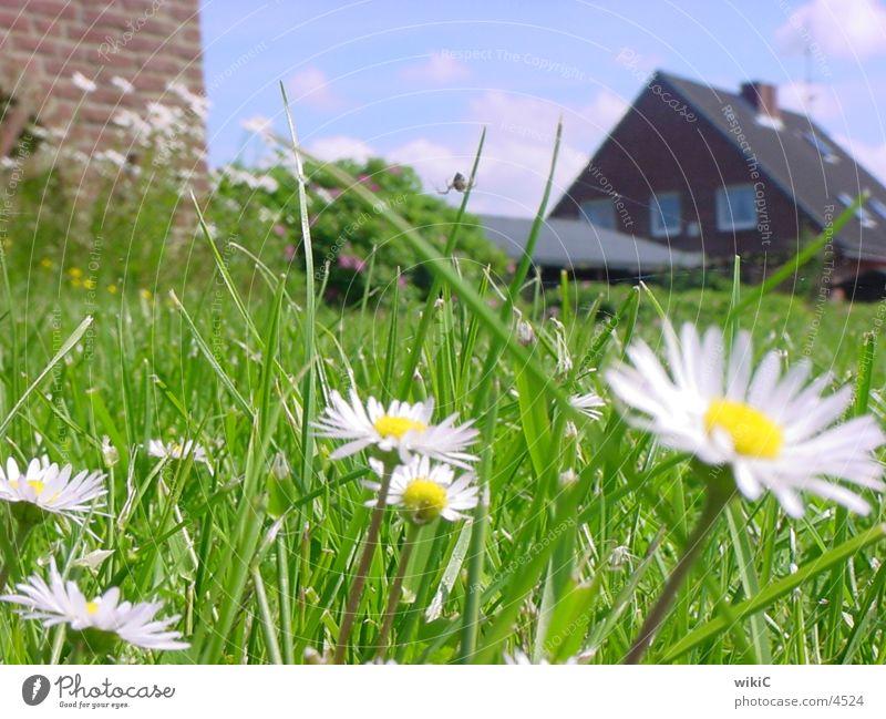 Blümchen2 grün weiß Blume