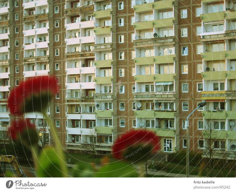 Mauerbluemchen Blume rot Haus Hochhaus Fassade Plattenbau