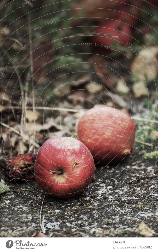 Fallobst alt grün Pflanze Sommer rot schwarz Wiese Herbst Gras Wege & Pfade grau Stein Zeit natürlich Garten liegen