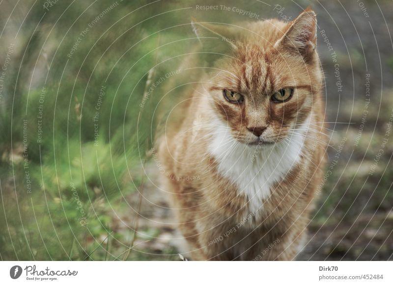 Wenn du glaubst, dass du entkommst ... Katze grün weiß Tier schwarz gelb kalt Umwelt Wiese Gras Wege & Pfade grau Garten braun Kraft gold