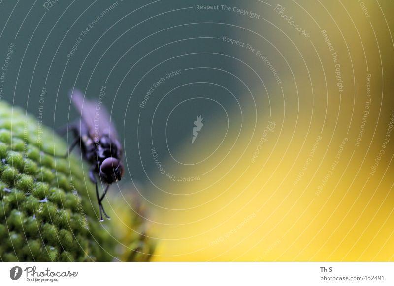 Fliege Natur ruhig Tier Freiheit Gelassenheit
