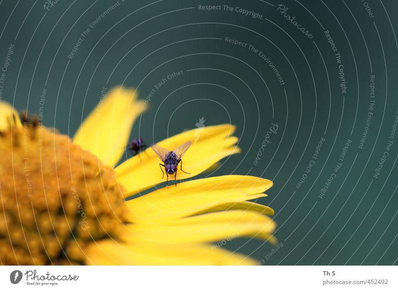 Fliege Natur Blume Tier Wiese Frühling natürlich Frühlingsgefühle