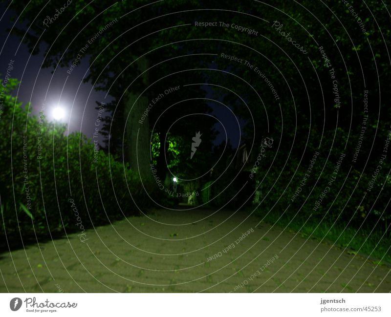 Weg bei Mondschein Nacht dunkel Bürgersteig Wege & Pfade Grünes Licht