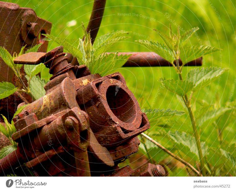 Schrottgewächs Natur Technik & Technologie Müll Landwirtschaft Rost Elektrisches Gerät
