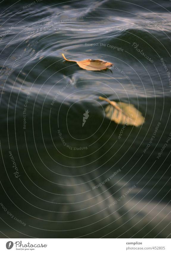 ..dann kam der Herbst! Wasser Pflanze Sonne Baum Meer Erholung ruhig Blatt Strand gelb Umwelt Küste Schwimmen & Baden Garten braun