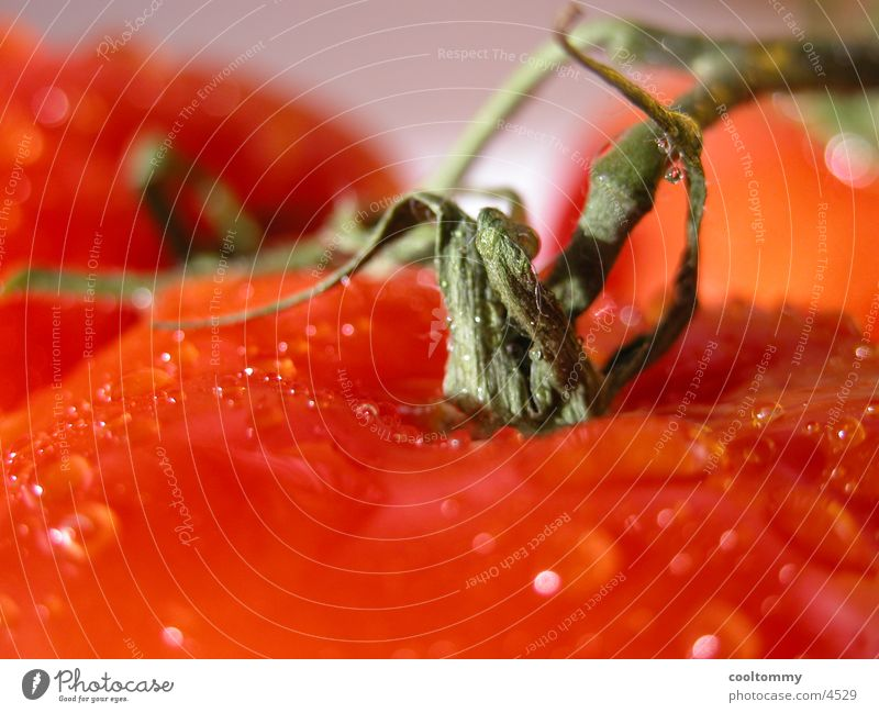 tomate Gesundheit Tomate