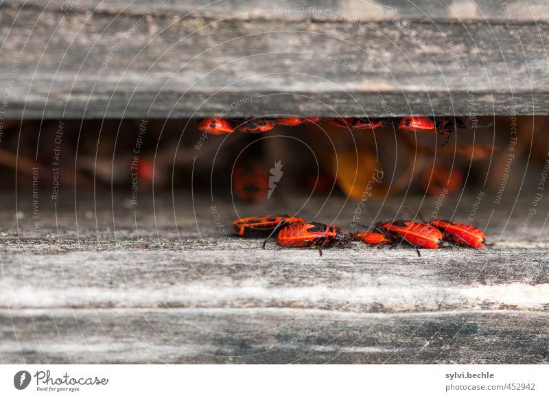 Untermieter - glückliche Großfamilie Natur Sommer rot Tier Umwelt grau Holz klein braun Zusammensein Wohnung sitzen Wildtier Häusliches Leben Tiergruppe Sicherheit