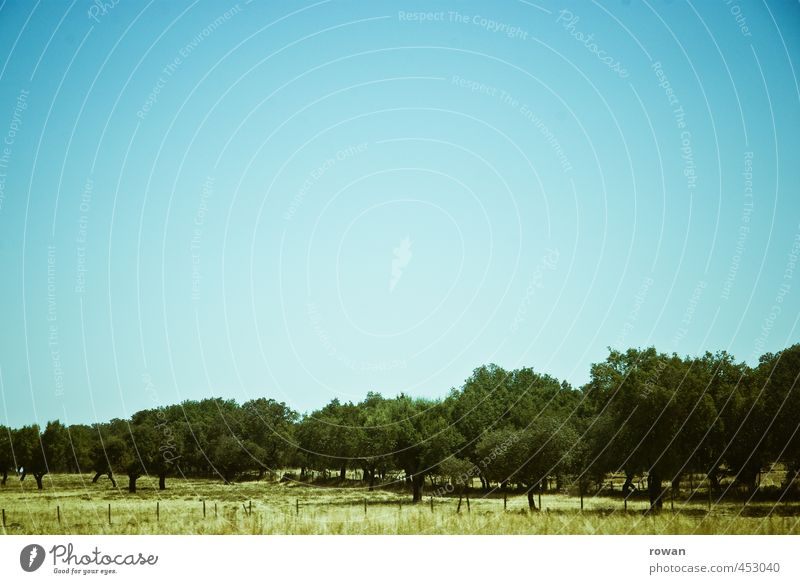 wald Sonne Baum Landschaft Wald Wärme Feld Schönes Wetter