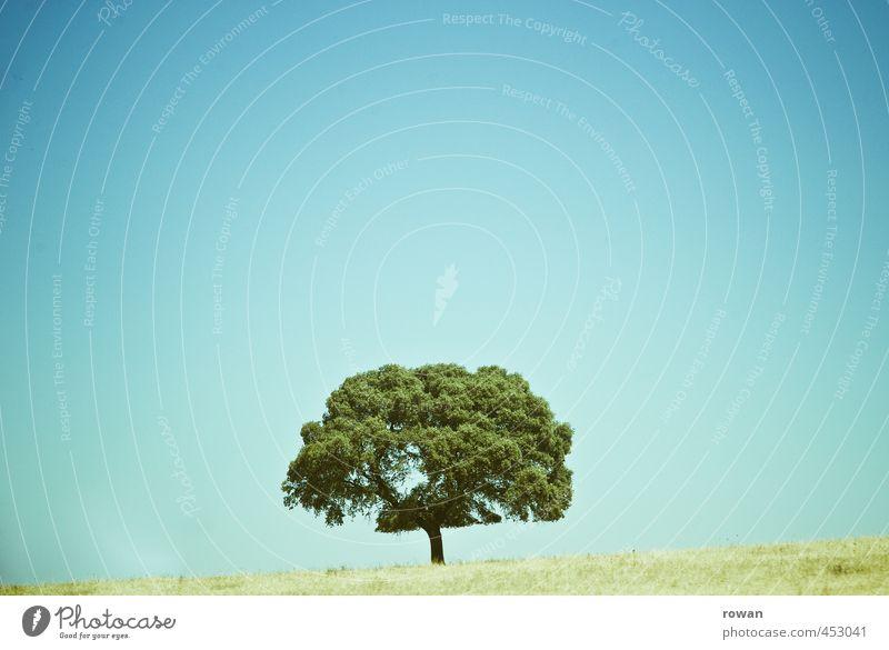 baum Umwelt Natur Landschaft Pflanze Himmel Schönes Wetter Baum Garten Park Wiese grün einzeln sommerlich Sommer Wachstum Farbfoto Außenaufnahme Menschenleer