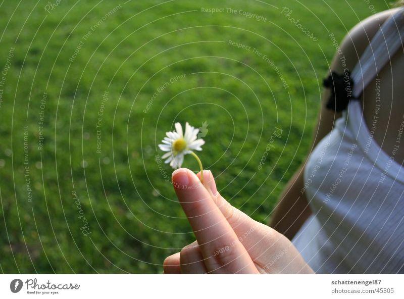 einsames bluemchen Hand weiß Blume Gras Finger Brust Schulter Gänseblümchen Fingernagel