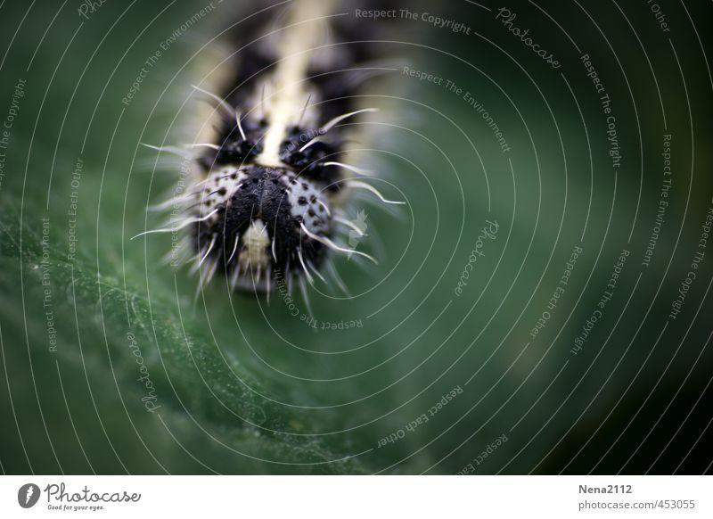 Portrait einer Kohlweißlingsraupe Natur grün Pflanze Sommer Blatt Tier schwarz Umwelt Auge Wiese klein Garten Behaarung Park Schönes Wetter