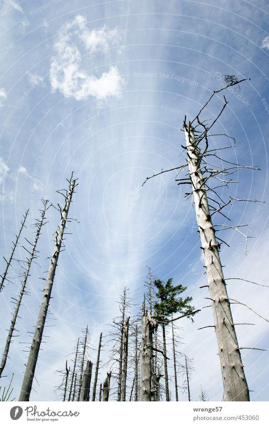 Totenwald Himmel Natur Pflanze Baum Wolken Wald Berge u. Gebirge Tod Holz Baumstamm vergangen Nationalpark himmelblau Nadelbaum Lebensraum Harz
