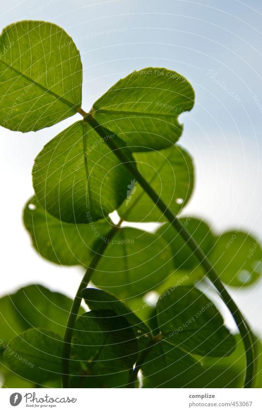 Glücksklee Himmel Natur Pflanze grün Blatt Leben Wiese natürlich Gras Garten Erfolg Sträucher 3 rein Wohlgefühl