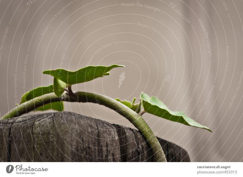 Kletterkünstler Natur grün Pflanze Einsamkeit Umwelt Freiheit grau Erfolg Perspektive einfach Hoffnung Lebensfreude Neugier Gelassenheit lang bizarr