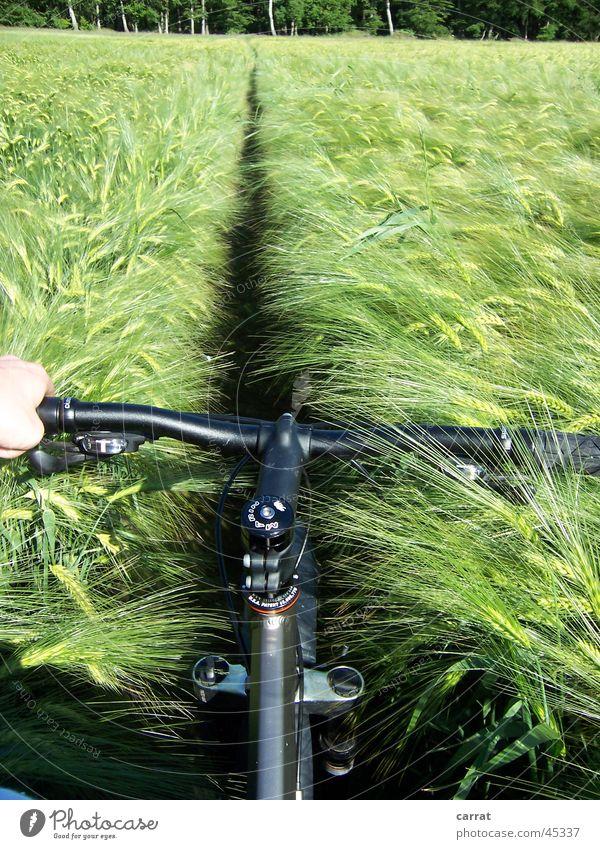 Feldweg?!? Ferien & Urlaub & Reisen Sommer Meer Linie Fahrrad Feld Verkehr Ernte Kornfeld Gelände Mecklenburg-Vorpommern Mountainbike egoistisch Egoperspektive