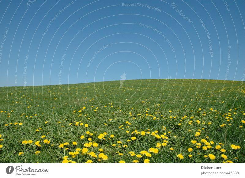 Sonnig, wolkenlos, 28° Wiese Horizont grün Hügel Sommer Blume Löwenzahn Himmel blau