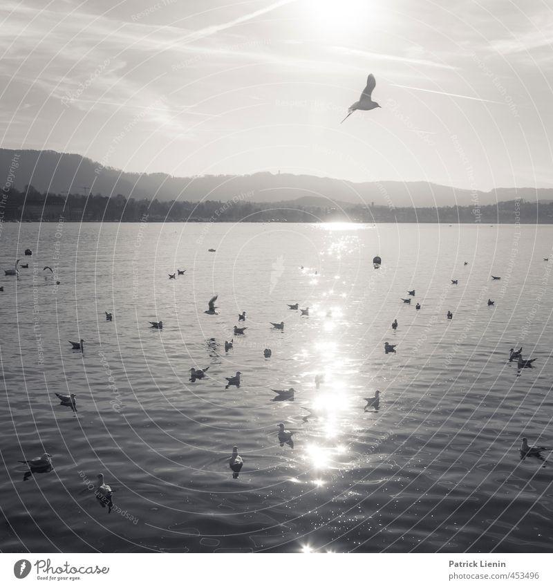Right this second Natur Ferien & Urlaub & Reisen Wasser Sonne Erholung Einsamkeit Landschaft ruhig Tier Ferne Umwelt Berge u. Gebirge Freiheit Stimmung fliegen