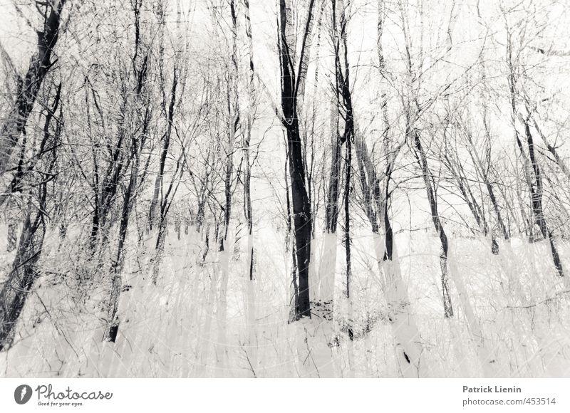 Never Mess With Sunday Natur Pflanze Baum Erholung Einsamkeit Landschaft Wald Umwelt Schnee natürlich außergewöhnlich Luft Energie ästhetisch Urelemente