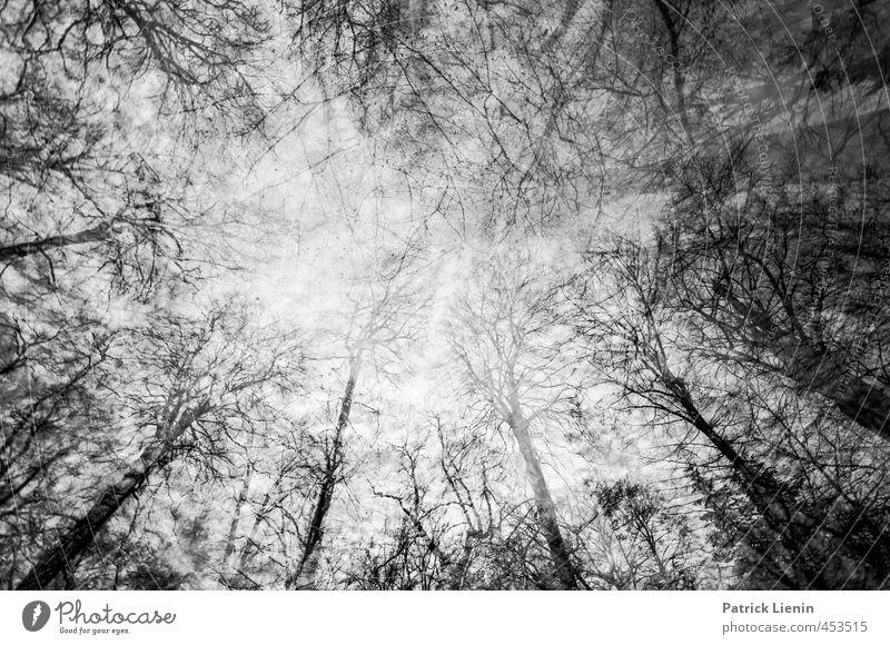 Lost in the Forest Himmel Natur Pflanze Landschaft Winter Wald Umwelt Stimmung Wetter Perspektive ästhetisch Urelemente entdecken Irritation Verzweiflung bizarr