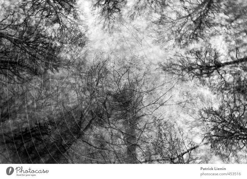 Enchanted Forest Himmel Natur Pflanze Himmel (Jenseits) Landschaft Winter dunkel Wald Umwelt Stimmung Wetter ästhetisch Perspektive Urelemente USA entdecken