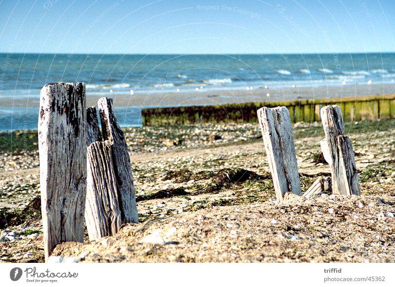 Wilder Strand Natur alt Holz Wildnis