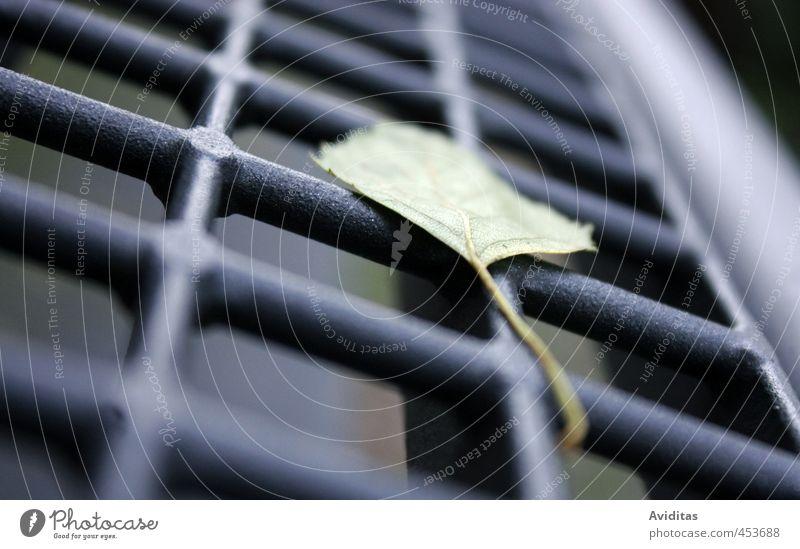 Durchs Raster gefallen Natur grün Pflanze Baum Erholung Einsamkeit ruhig Blatt schwarz dunkel Herbst Zeit Zufriedenheit stehen beobachten Sicherheit