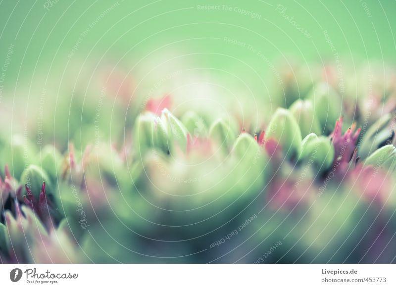 Blumen am Fenster Umwelt Natur Pflanze Sommer Blatt Blüte Nutzpflanze Blühend drehen Duft ästhetisch elegant frisch hell kalt natürlich schön wild weich grün