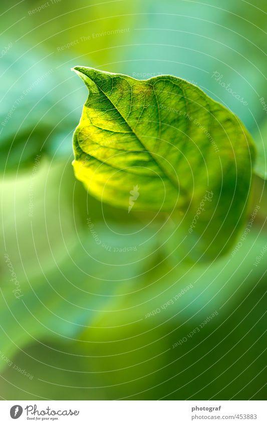 Blatt im Sonnenlicht Sommer Frühling Wetter Wind Sturm Ende Herbstfärbung erde Herbstferien Herbstes Herbstmeisterschaft Herbsttagung Herbstwetter