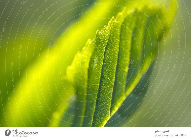 Herbst Himmel Natur Pflanze Sommer Sonne Tier Blatt Gras Frühling Wetter Wind Erde Sträucher Urelemente Jahreszeiten Ende