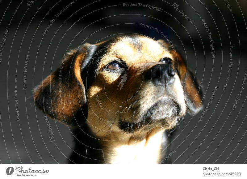 Der Hund Tier süß Haustier Welpe