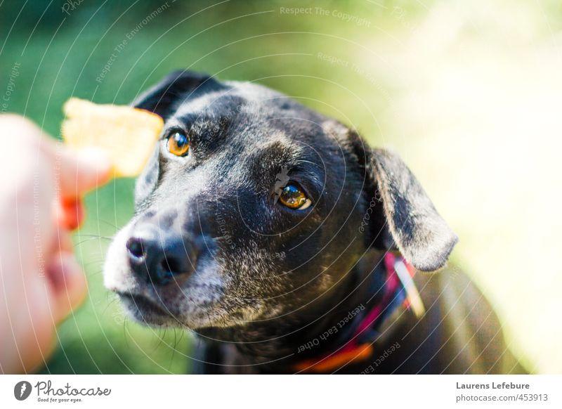 Hund Natur grün weiß Sommer rot Tier schwarz Wald lustig Essen träumen Fröhlichkeit niedlich Freundlichkeit festhalten