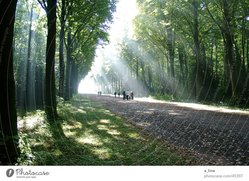 spaziergang Baum Sonnenstrahlen Wald Spazierweg Licht Schatten