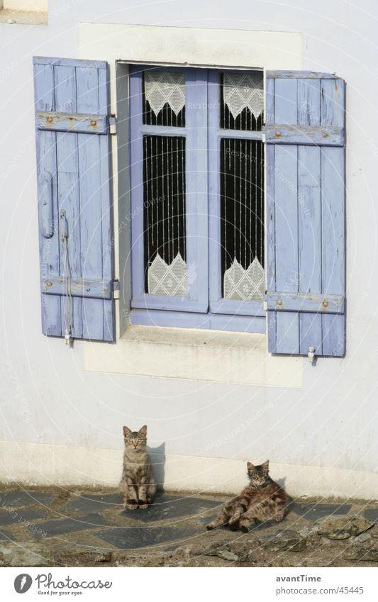 Katzen Siesta ruhig Erholung Fenster Pause Frankreich Bretagne Fensterladen Belle île