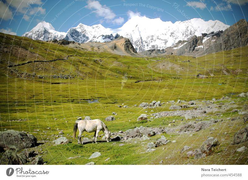 Whitehorse Umwelt Natur Landschaft Pflanze Tier Erde Himmel Wolken Klima Schönes Wetter Schnee Wiese Berge u. Gebirge Ausangate Pferd Stein wandern grün weiß
