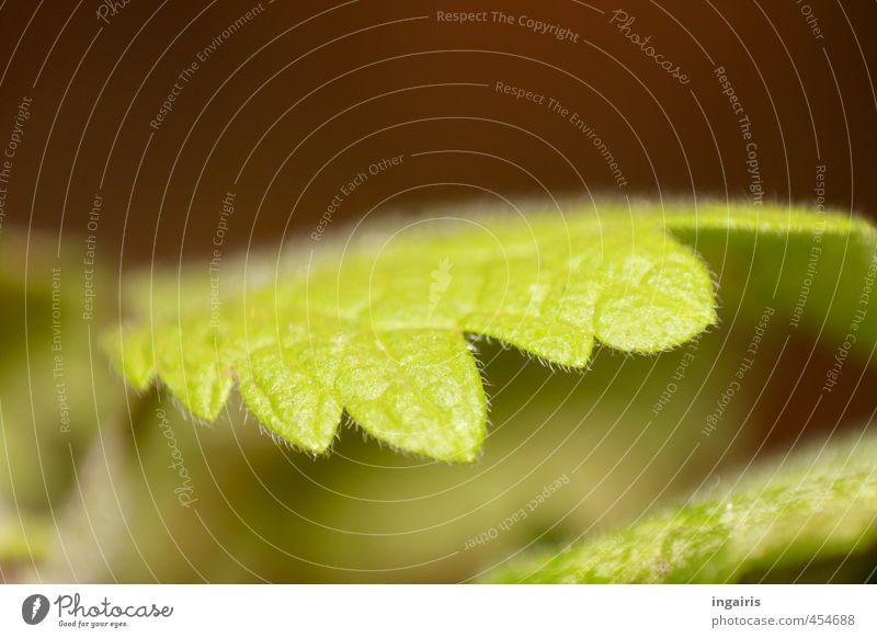 Grün Natur grün Pflanze Blatt Frühling braun Wachstum nah fein zartes Grün