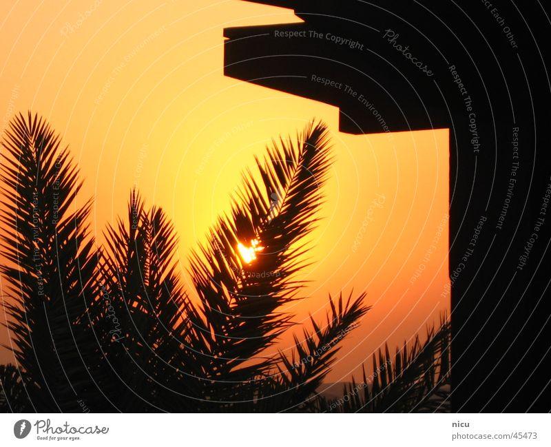 Untergang in der Wüste Sonne Reichtum Palme